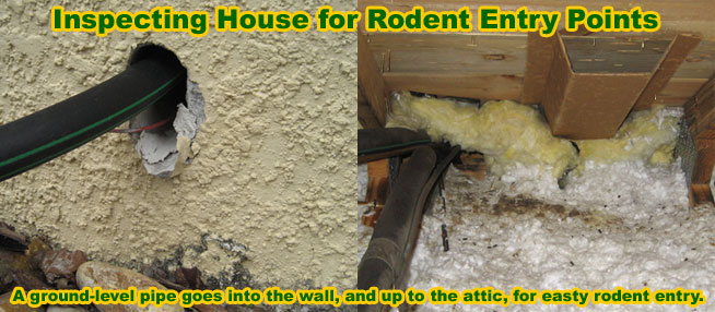 Rat Prevention How To Prevent Rats From Getting In Your